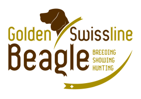 Golden Swissline Beagle