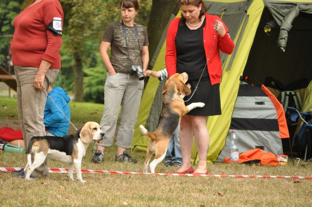 Specialty Show of Czech Beagle Club